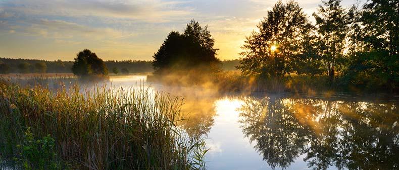 naturskön bilde med skog och sjö